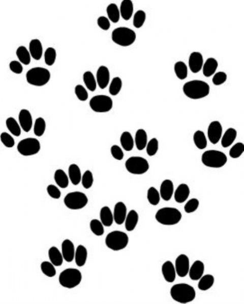 12 Pawprint Stickers